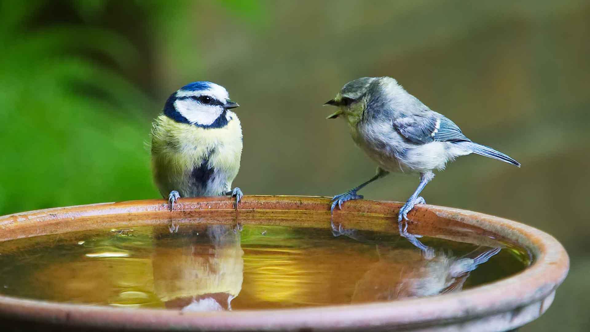 Best Bird Baths2