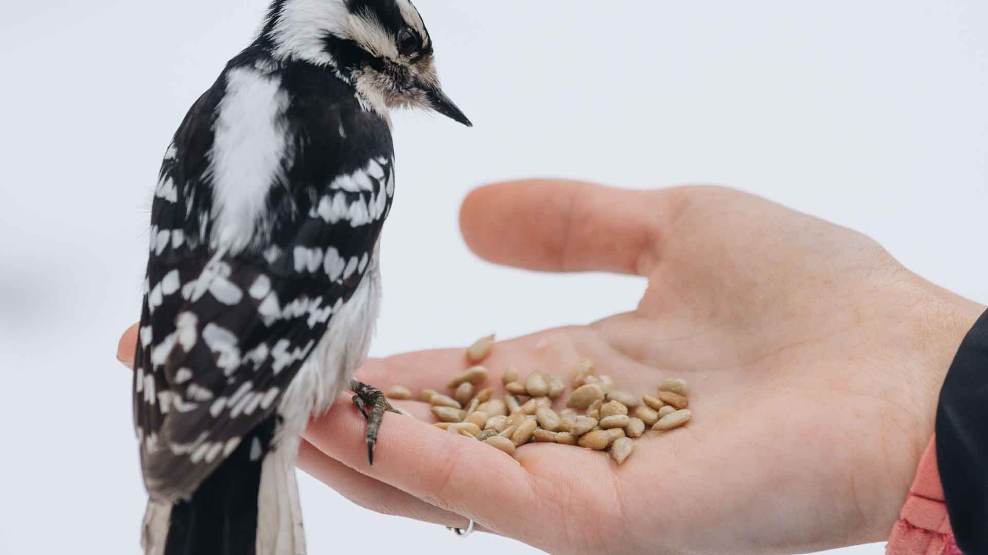 best bird seeds